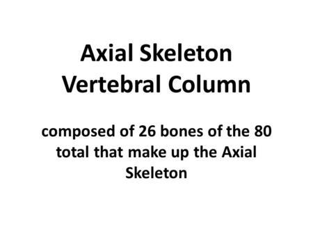 Axial Skeleton Vertebral Column composed of 26 bones of the 80 total that make up the Axial Skeleton.