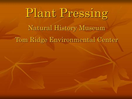 Plant Pressing Natural History Museum Tom Ridge Environmental Center.
