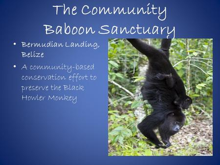 The Community Baboon Sanctuary Bermudian Landing, Belize A community-based conservation effort to preserve the Black Howler Monkey.