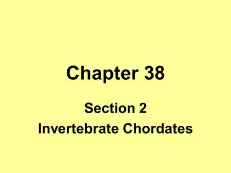 Section 2 Invertebrate Chordates