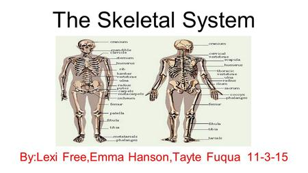 The Skeletal System By:Lexi Free,Emma Hanson,Tayte Fuqua 11-3-15.