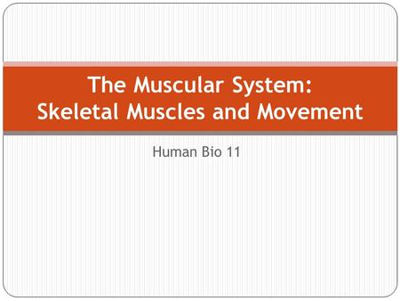 Human Bio 11 The Muscular System: Skeletal Muscles and Movement.