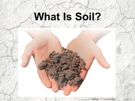 What Is Soil? Soils-1-1 Image: T. Loynachan. Soil is a layer of unconsolidated material on the Earth's surface in which plants grow. Soils-1-2 Image: