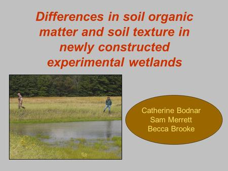 Differences in soil organic matter and soil texture in newly constructed experimental wetlands Catherine Bodnar Sam Merrett Becca Brooke.