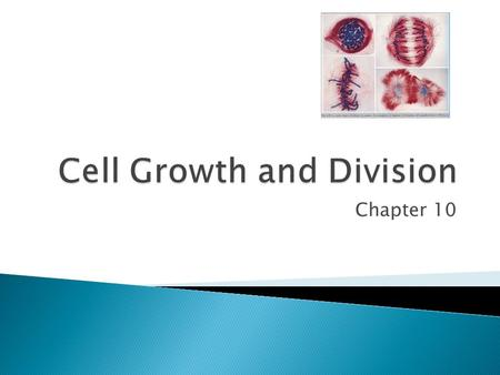 Chapter 10.  Limits to Cell Size ◦ 1) Information Overload – as size increases, DNA is not able to provide information for all the needs of the cell.