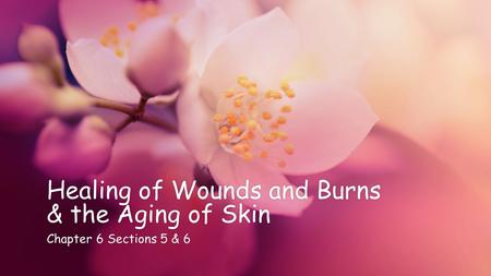 Healing of Wounds and Burns & the Aging of Skin Chapter 6 Sections 5 & 6Chapter 6 Sections 5 & 6.