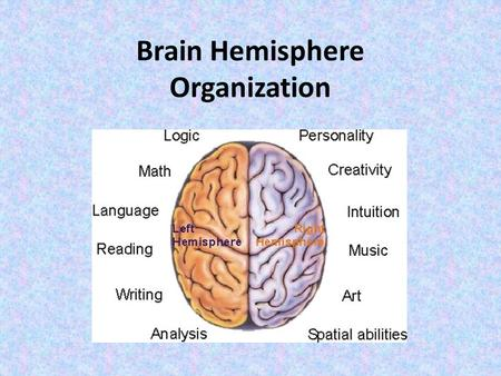 Brain Hemisphere Organization. The Thinking Part of the Brain: Components of the Cerebrum Cerebral Hemispheres – left and right halves of cerebrum Corpus.