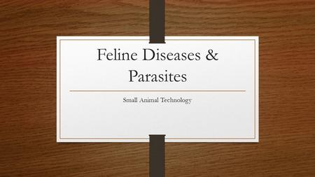 Feline Diseases & Parasites Small Animal Technology.