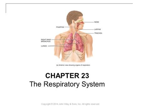 Copyright © 2014 John Wiley & Sons, Inc. All rights reserved. CHAPTER 23 The Respiratory System.