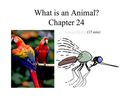 What is an Animal? Chapter 24
