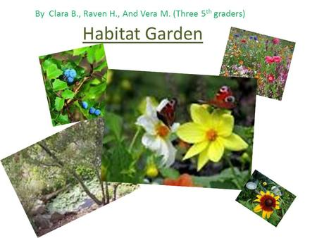 Habitat Garden By Clara B., Raven H., And Vera M. (Three 5 th graders)