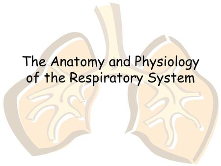 The Anatomy and Physiology of the Respiratory System.