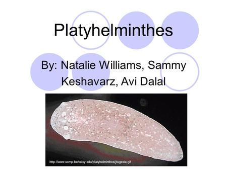 By: Natalie Williams, Sammy Keshavarz, Avi Dalal Platyhelminthes