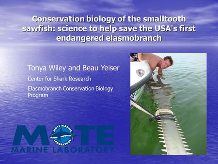 Conservation biology of the smalltooth sawfish: science to help save the USA's first endangered elasmobranch Tonya Wiley and Beau Yeiser Center for Shark.