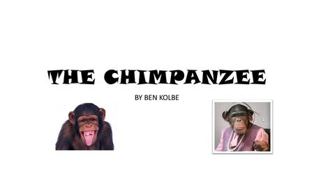 THE CHIMPANZEE BY BEN KOLBE. Mating When a male wants to mate, he shakes a tree branch or displays his erect penis to a female. If a female's interested.