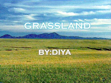 Grasslands are large areas with hills of grass and wildflowers. Sometimes grasslands are called prairies, savannahs, or steppes.
