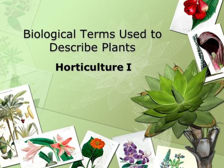 Biological Terms Used to Describe Plants Horticulture I.