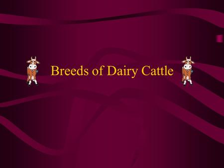 Breeds of Dairy Cattle.