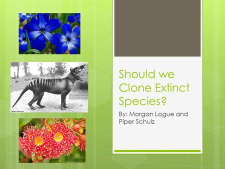 Should we Clone Extinct Species? By: Morgan Logue and Piper Schulz.