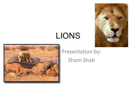 LIONS Presentation by: Sham Shah What kind of vertebrate? Phylum: Chordata Class: Mammalia Order: Carnivora Family: Felidae Genus: Panthera Species: