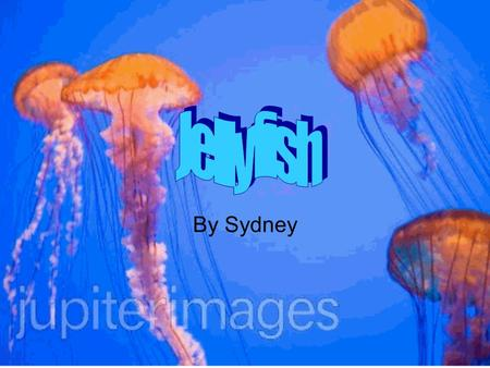L By Sydney. Size/Weight Most jellyfish are 97pounds Some jellyfish are more than 50 ft. long Small jellyfish weigh 5 lb. Some other jellyfish weigh up.