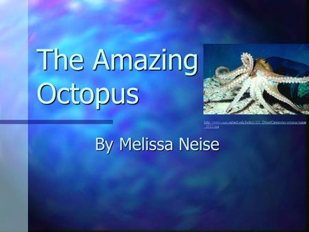 The Amazing Octopus By Melissa Neise  vision.caltech.edu/feifeili/101_ObjectCategories/octopus/image _0013.jpg.