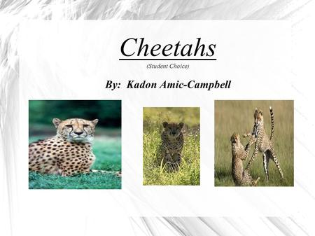 Cheetahs (Student Choice) By: Kadon Amic-Campbell.