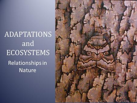 ADAPTATIONS and ECOSYSTEMS Relationships in Nature.