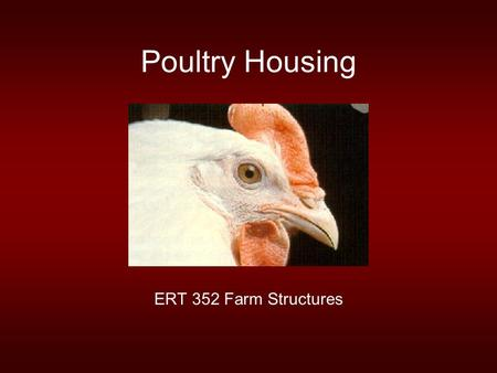 Poultry Housing ERT 352 Farm Structures. Early Poultry Production Prior to the second world war most chickens were produced in open yards or dirt floor.