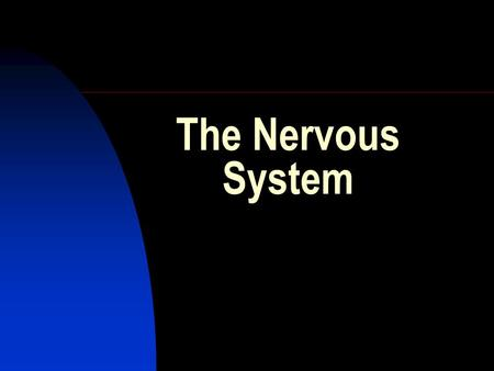 The Nervous System. Functions of the nervous system include:  coordination of the physical movements of the body  corresponding to the action of the.