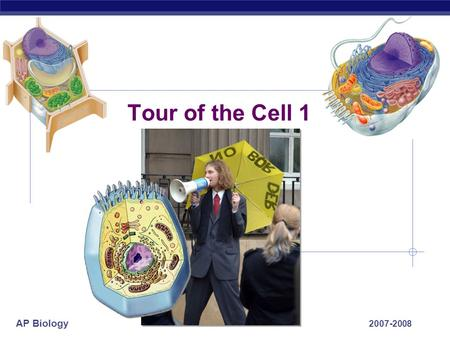 AP Biology 2007-2008 Tour of the Cell 1 AP Biology Prokaryote bacteria cells Types of cells Eukaryote animal cells -no membrane-bound organelles - organelles.