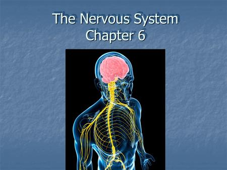 The Nervous System Chapter 6. The Nervous system has three major functions :  Sensory  monitors internal & external environment through presence of.