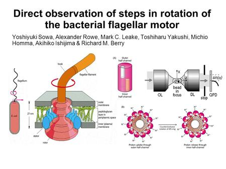 Direct observation of steps in rotation of the bacterial flagellar motor Yoshiyuki Sowa, Alexander Rowe, Mark C. Leake, Toshiharu Yakushi, Michio Homma,