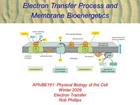 Electron Transfer Process and Membrane Bioenergetics APh/BE161: Physical Biology of the Cell Winter 2009 Electron Transfer Rob Phillips.