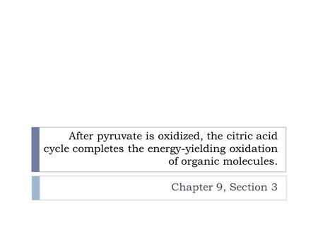 After pyruvate is oxidized, the citric acid cycle completes the energy-yielding oxidation of organic molecules. Chapter 9, Section 3.
