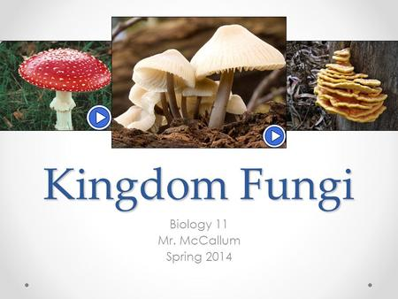 Kingdom Fungi Biology 11 Mr. McCallum Spring 2014.
