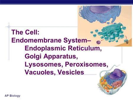 AP Biology The Cell: Endomembrane System– Endoplasmic Reticulum, Golgi Apparatus, Lysosomes, Peroxisomes, Vacuoles, Vesicles.