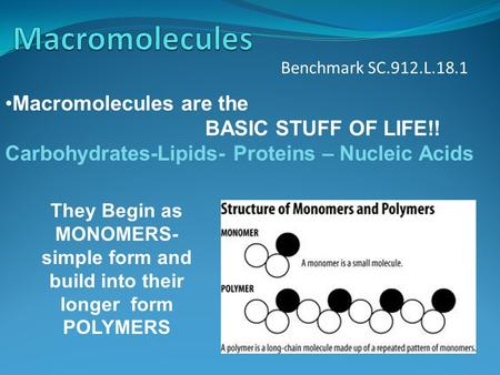 Benchmark SC.912.L.18.1 Macromolecules are the BASIC STUFF OF LIFE!! Carbohydrates-Lipids- Proteins – Nucleic Acids They Begin as MONOMERS- simple form.