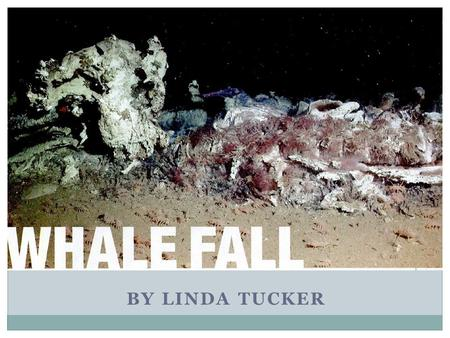 BY LINDA TUCKER. The Whale Fall Process When a whale dies, the carcass sinks to the ocean floor Carcass provides food and energy for organisms Unique.