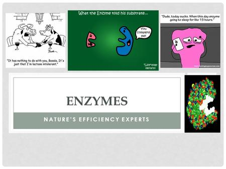 NATURE'S EFFICIENCY EXPERTS ENZYMES. WHAT ARE ENZYMES? Enzymes are a special group of PROTEINS Remember proteins are responsible for structure and function.