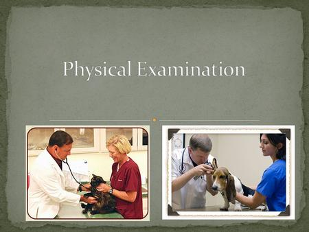 After this lesson, students should be able to: Explain the importance of physical examinations. Describe the characteristics of a healthy animal. Monitor.