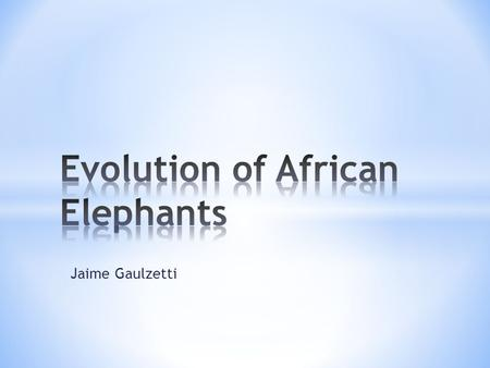 Jaime Gaulzetti. * African elephants are the largest land animals on Earth. * They originated in Africa about 1.5 million years ago. * They are mammals.