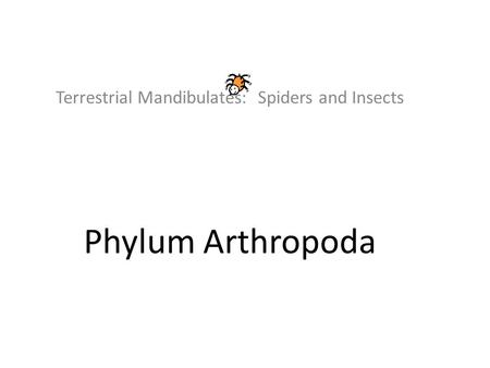 Terrestrial Mandibulates: Spiders and Insects