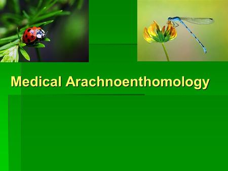 Medical Arachnoenthomology Plan of lecture  Phylum Arthropoda: general characteristic, classification, medical importance.  Crustaceans as intermediate.