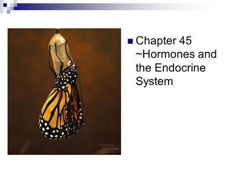 Chapter 45 ~Hormones and the Endocrine System. Endocrine and Nervous System Regulation Nervous system - Electrical signals - Fast acting for immediate.