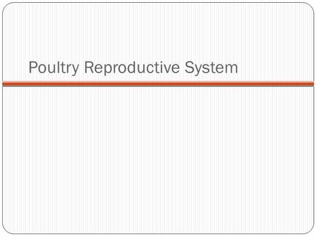 Poultry Reproductive System. The major difference between mammals and poultry reproductive systems is that the embryo of livestock develops inside the.