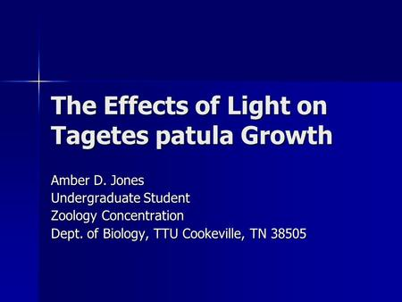 The Effects of Light on Tagetes patula Growth Amber D. Jones Undergraduate Student Zoology Concentration Dept. of Biology, TTU Cookeville, TN 38505.