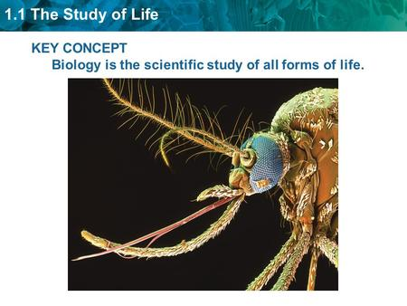 1.1 The Study of Life KEY CONCEPT Biology is the scientific study of all forms of life.