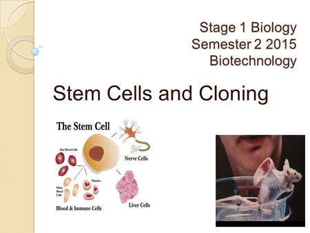 Stage 1 Biology Semester 2 2015 Biotechnology Stem Cells and Cloning.