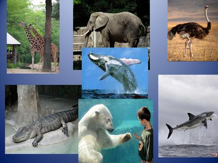 What can you learn AT THE ZOO The plan of our work Describe the animals Describe special animals Meet different animals Learn to speak about special.